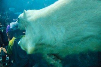 img_3193-polar-bear-aquarium-4-almost-done