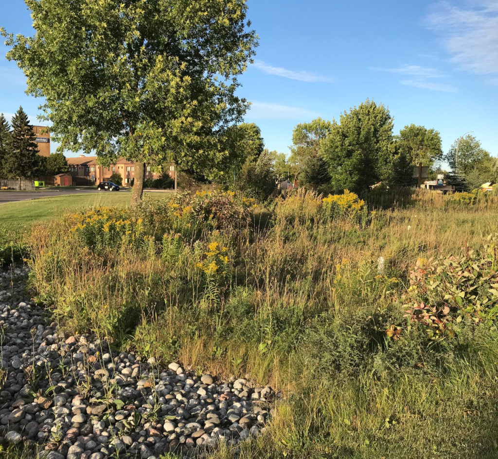 photo of bioretention area showing rock, trees, plants