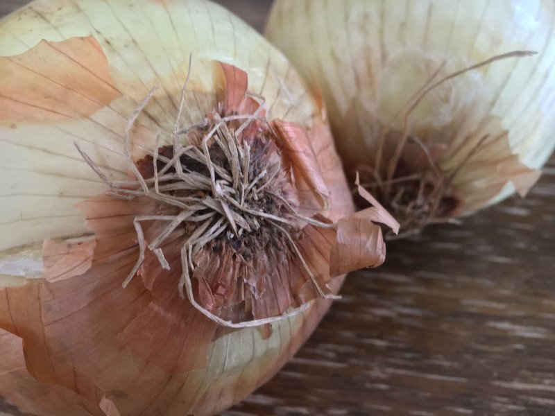 Photo of spanish onions